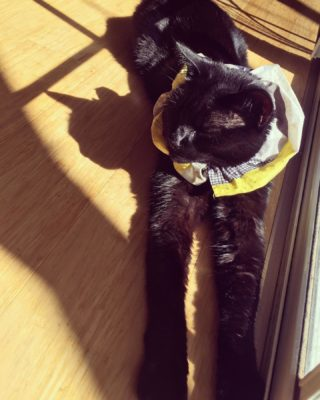 Such a tough life.  #catlife #catsofinstagram #catstagram #sunshinyday