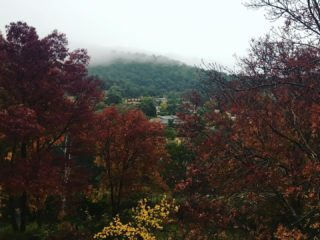 Moody morning. And I'm still sick. So glad I get to stay in bed.  #rainyday #landscape #autumn #canberra #sickday