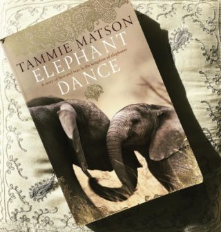 I've been optimistically reading this book ahead of my panel at the Cairns Tropical Writers Festival in August. I have every single thing crossed that the event goes ahead. In the meantime this memoir is wonderful. Tammie has worked in elephant conservation in Africa and has pretty much lived my dream life in some alternate reality. If you're an elephant lover, this one is for you.  #elephant #elephantlove #elephantlover #africa